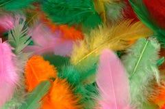 五颜六色的羽毛 免版税图库摄影
