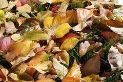五颜六色的背景由下落的秋叶做成 库存照片