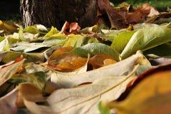 五颜六色的背景由下落的秋叶做成 图库摄影