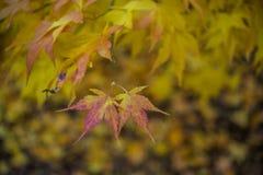 五颜六色的背景由下落的秋叶做成 免版税库存图片