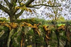 五颜六色的背景由下落的秋叶做成 库存图片