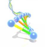 五颜六色的脱氧核糖核酸螺旋子线 图库摄影