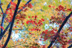 五颜六色的自然在秋天期间 免版税库存图片