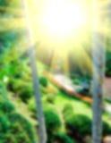 五颜六色的自然抽象迷离背景  库存图片