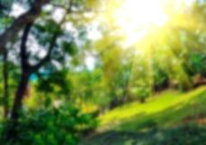 五颜六色的自然抽象迷离背景  图库摄影