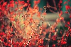 五颜六色的自然摄影 库存图片