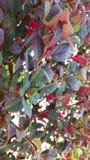 五颜六色的自然 库存照片