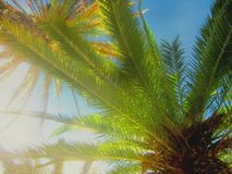 五颜六色的艺术性的棕榈 库存图片