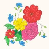 五颜六色的花传染媒介花束  图画递她的温暖的妇女年轻人的早晨内衣 免版税库存照片