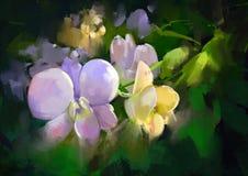 五颜六色的花兰花 库存照片