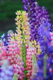五颜六色的花关闭在阳光天 免版税库存照片