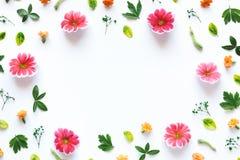 五颜六色的花卉框架 库存照片