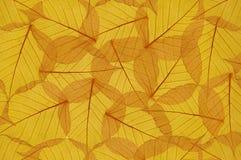 五颜六色的花卉黄色叶子背景  库存图片