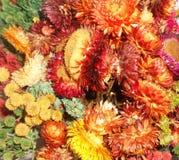 五颜六色的花印刷品 图库摄影