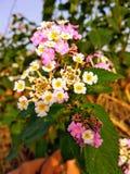 五颜六色的花可爱看 库存图片