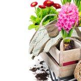 五颜六色的花和园艺工具 免版税图库摄影