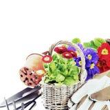 五颜六色的花和园艺工具 库存照片
