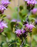 五颜六色的花和土蜂 免版税库存图片