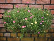 五颜六色的花和块 免版税库存照片