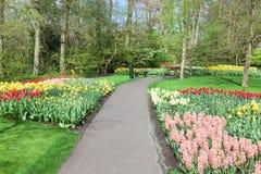 五颜六色的花和开花在荷兰春天庭院Keukenhof (利瑟,荷兰)里 库存图片
