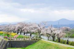 五颜六色的花和樱桃树在沿城石河岸的公园在宫城, Tohoku,日本在春天 库存图片