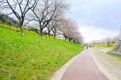 五颜六色的花和樱桃树在沿城石河岸的公园在宫城, Tohoku,日本在春天 免版税图库摄影