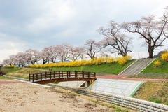 五颜六色的花和樱桃树在沿城石河岸的公园在宫城, Tohoku,日本在春天 免版税库存照片