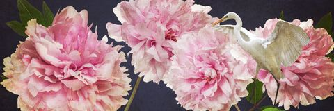 五颜六色的花和白色苍鹭边界 免版税库存照片