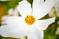 五颜六色的花园 免版税库存图片