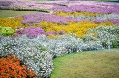 五颜六色的花园 免版税库存照片