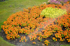 五颜六色的花园 库存照片