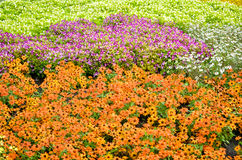 五颜六色的花园 图库摄影