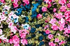 五颜六色的花圃在庭院里 在视图之上 库存图片