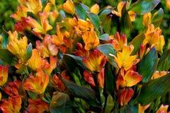 五颜六色的花在庭院里 库存照片