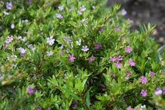 五颜六色的花在庭院里 图库摄影
