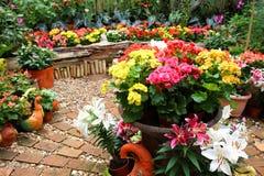 五颜六色的花在庭院里 免版税库存图片