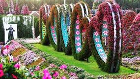 五颜六色的花在心脏形状设计了在奇迹庭院,迪拜里 免版税图库摄影