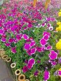 五颜六色的花在春天 免版税库存图片