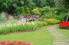 五颜六色的花在美丽的自然公园,泰国 库存图片