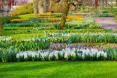 五颜六色的花在荷兰春天庭院Keukenhof,利瑟,荷兰里开花 库存图片