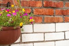五颜六色的花垂悬的篮子  库存照片