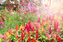 五颜六色的花夏天庭院 库存照片
