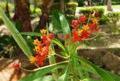 五颜六色的花对绽放 库存照片