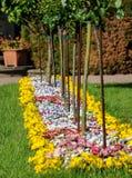 五颜六色的花床和草甸在一个公园在春天 库存图片