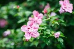 五颜六色的花开花的背景,花节日,夏天震动 免版税图库摄影