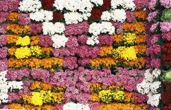 五颜六色的花开花的背景,菊花开花在清迈花节日,举行在2月每年 免版税库存图片