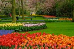 五颜六色的花春天 免版税库存照片