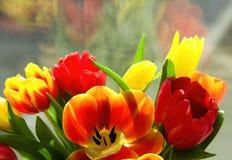 五颜六色的花春天 库存图片
