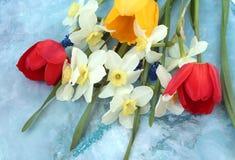 五颜六色的花春天 库存照片
