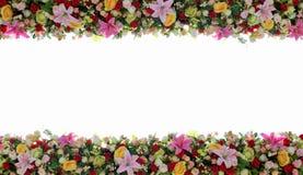 五颜六色的花有白色背景 免版税库存照片